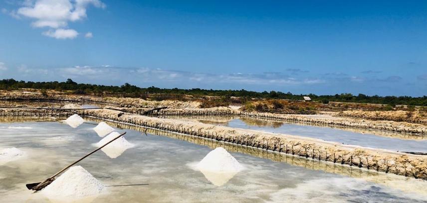 zalt salt pemba tanzania
